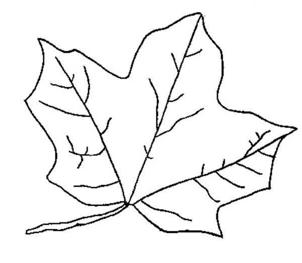 Maple Leaves Fall In Autumn Coloring Pages