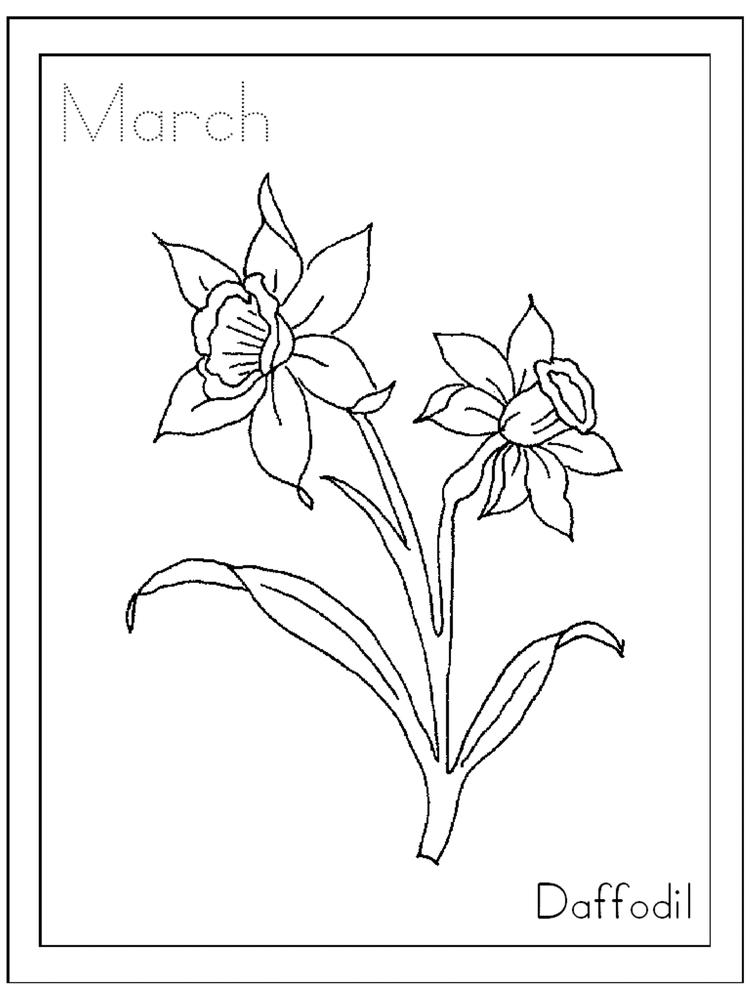March Daffodil Flower Coloring Page