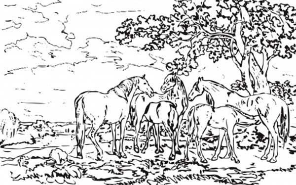 Mares And Foals In A River Landscapes Coloring Pages