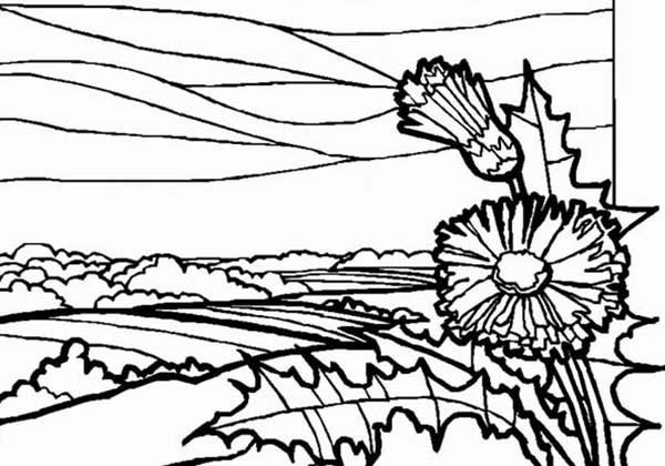 Meadow Landscapes Coloring Pages