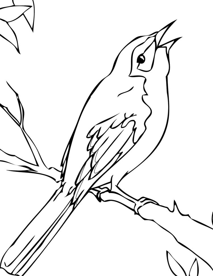 Mockingbird Coloring Page To Print