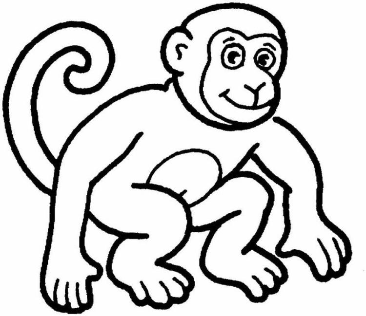 Monkey Coloring Page Animal
