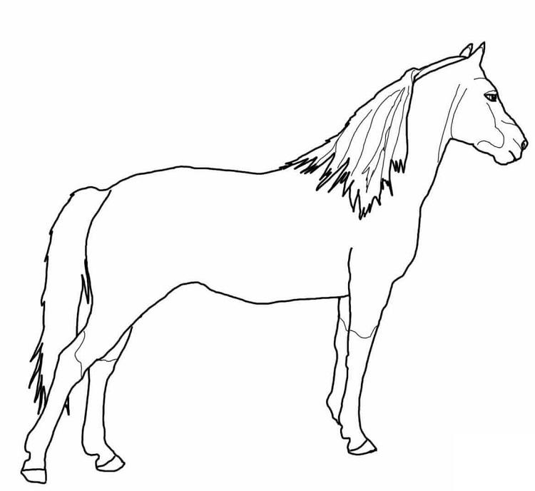 Morgan Horse Coloring Pages