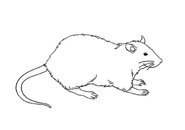 Mother Of Mouse And Rat Coloring Pages