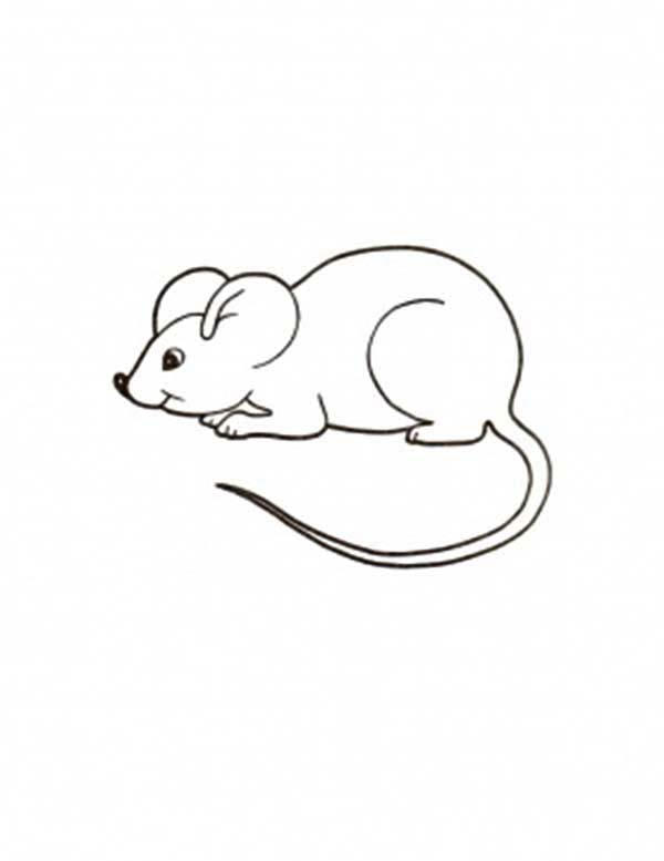 Mouse And Rat Coloring Pages For Kids