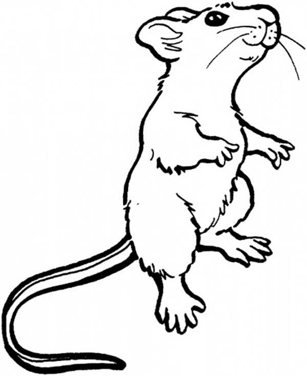 Mouse And Rat Smelling Food In Distance Coloring Pages