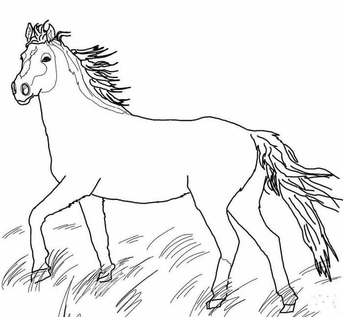 Mustang Horses Coloring Pages