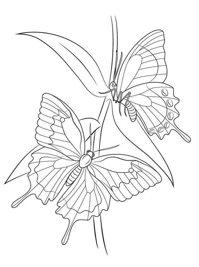 Nature Butterfly Coloring Pages