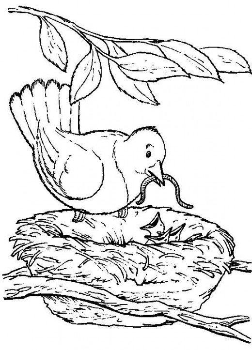 Nature Coloring Pages Bird Nest