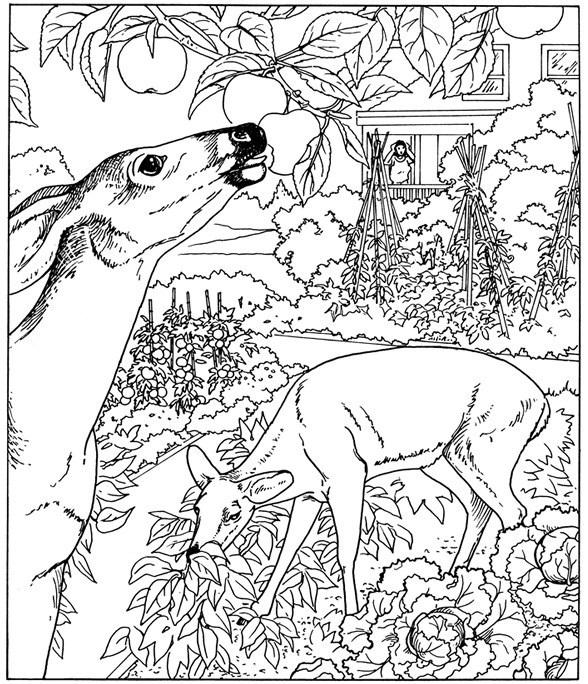 Nature Coloring Pages Deer In Jungle