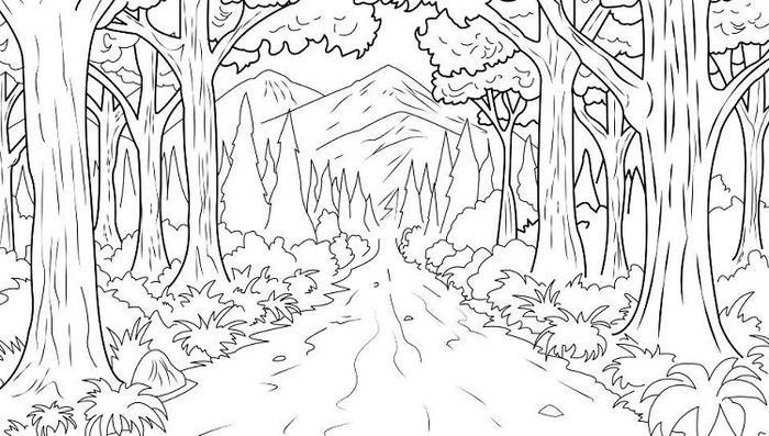 Nature Forest Coloring Pages