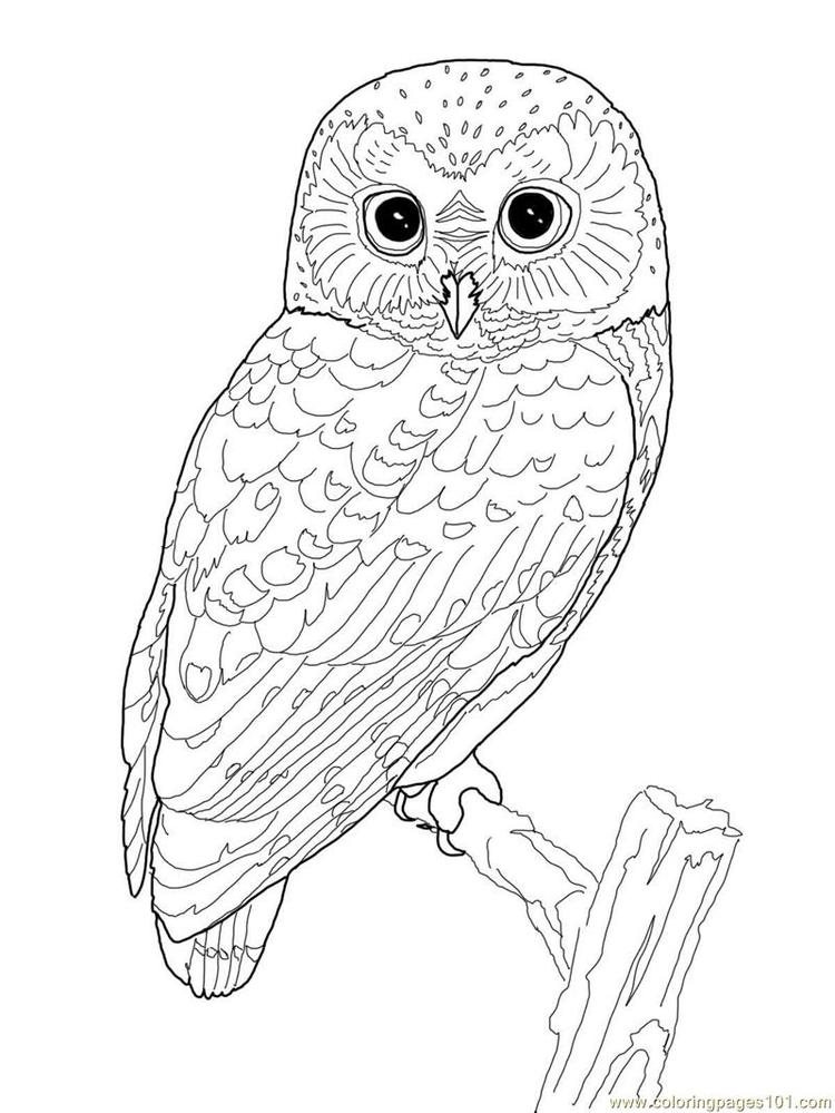 Nice Adult Coloring Pages Printable Owl