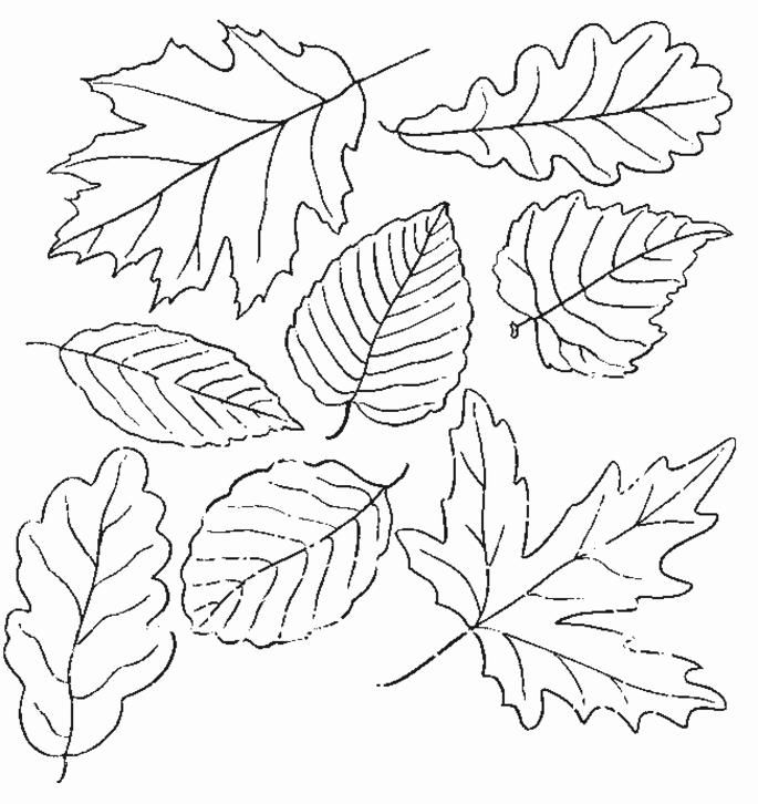Nice Fall Toddler Coloring Pages