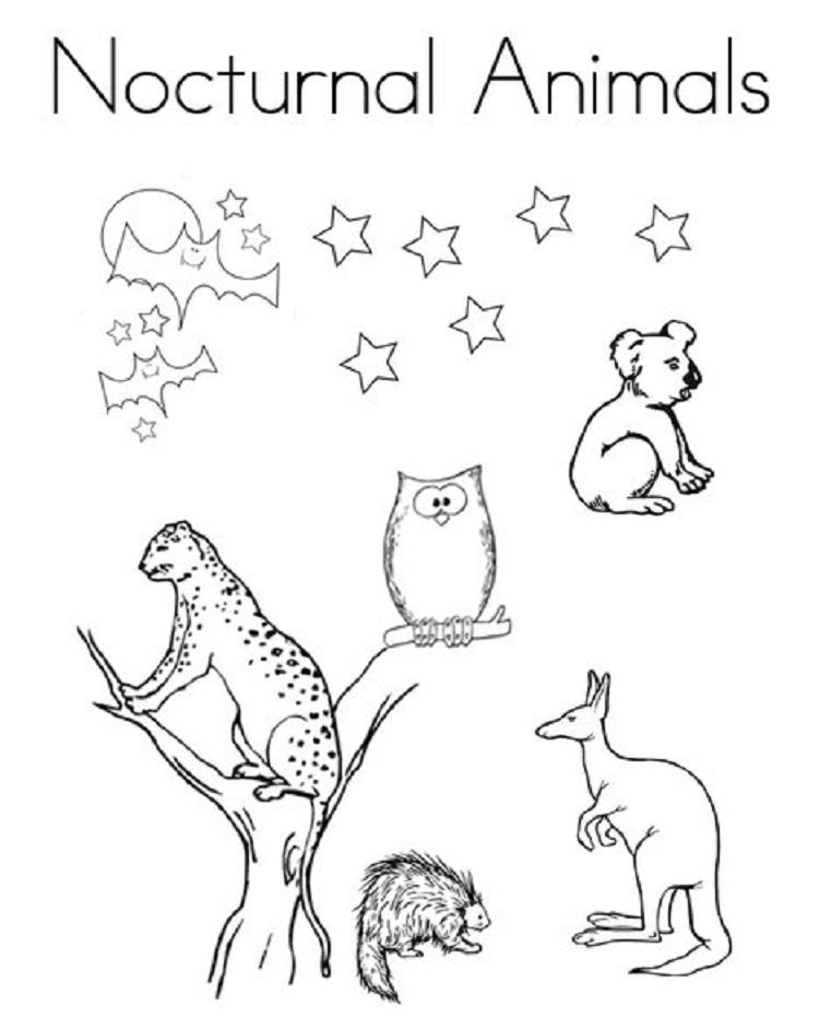 Nocturnal Animal Coloring Pages