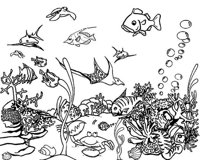 Ocean Coloring Pages Free