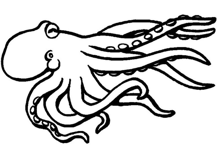 Octopus Coloring Pages For Children