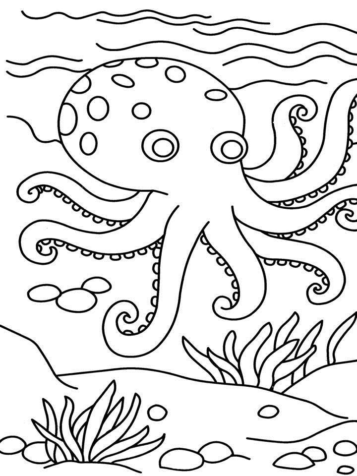 Octopus Coloring Pages For Kindergarten