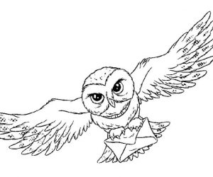 Owl coloring pages for adults 1