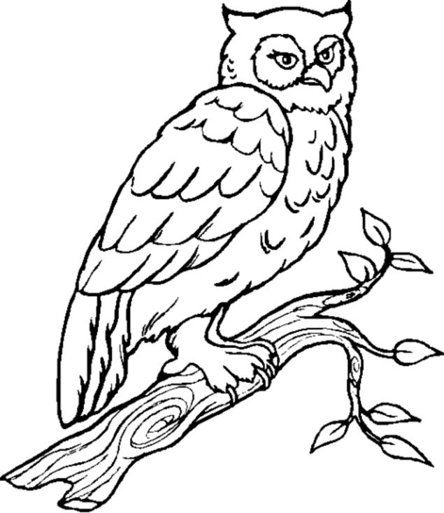 Owl On Tree Coloring Pages