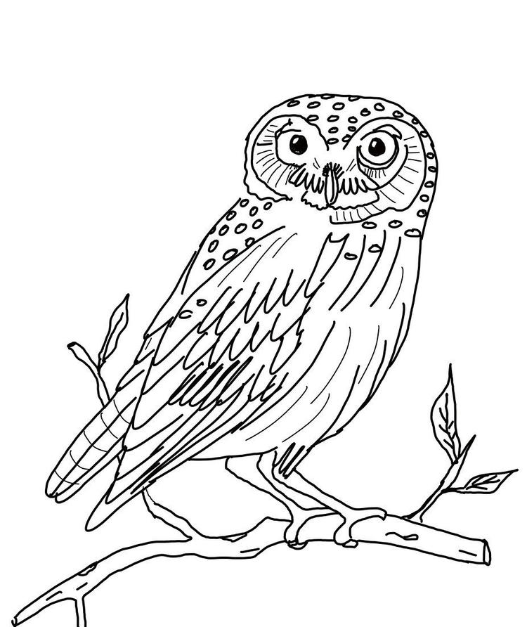 Owl Picture Coloring Pages