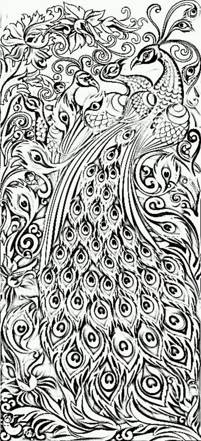 Peacock Coloring Pages Difficult For Adults