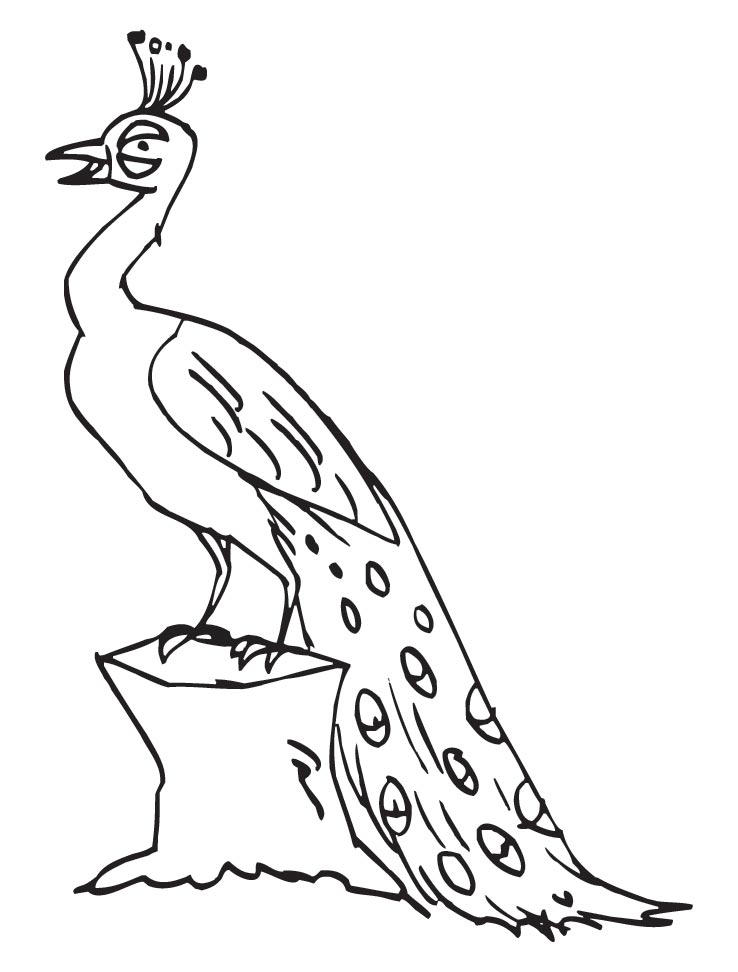 Peacock Coloring Pages Tail Down For Kids