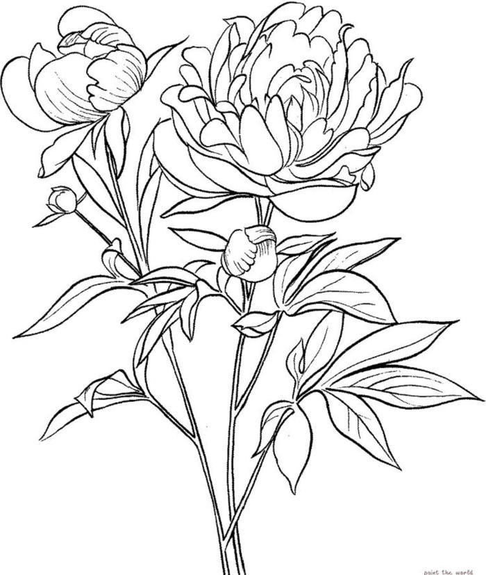 Peony Flower Coloring Pages