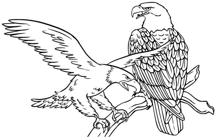 Perched Eagle Coloring Page Two Eagles Coloring Sheet
