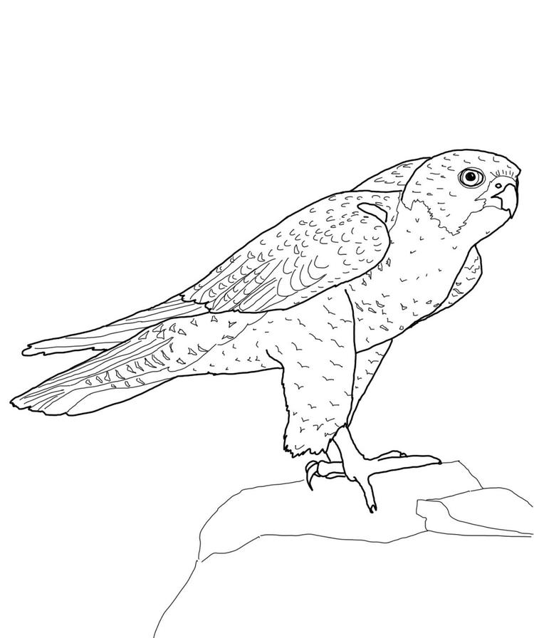 Perched Peregrine Falcon Bird Coloring Pages