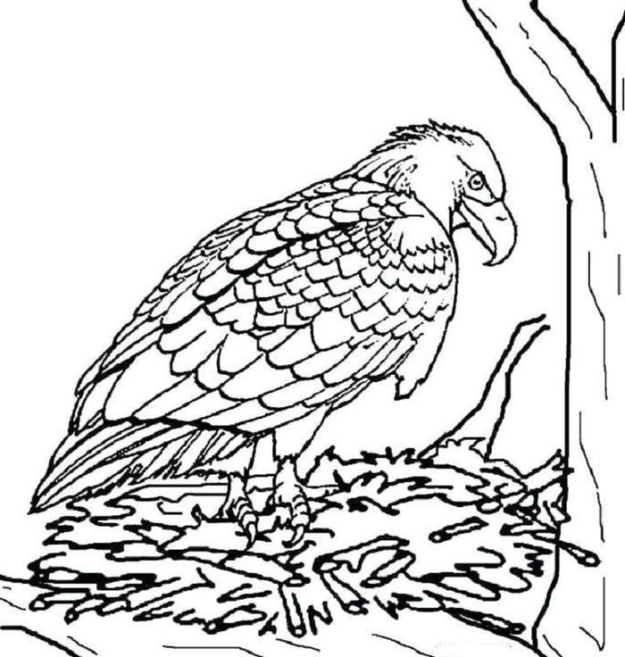 Peregrin Falcon Eagles Coloring Pages