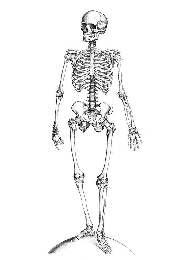 Perfect Human Anatomy Of Bones Coloring Pages