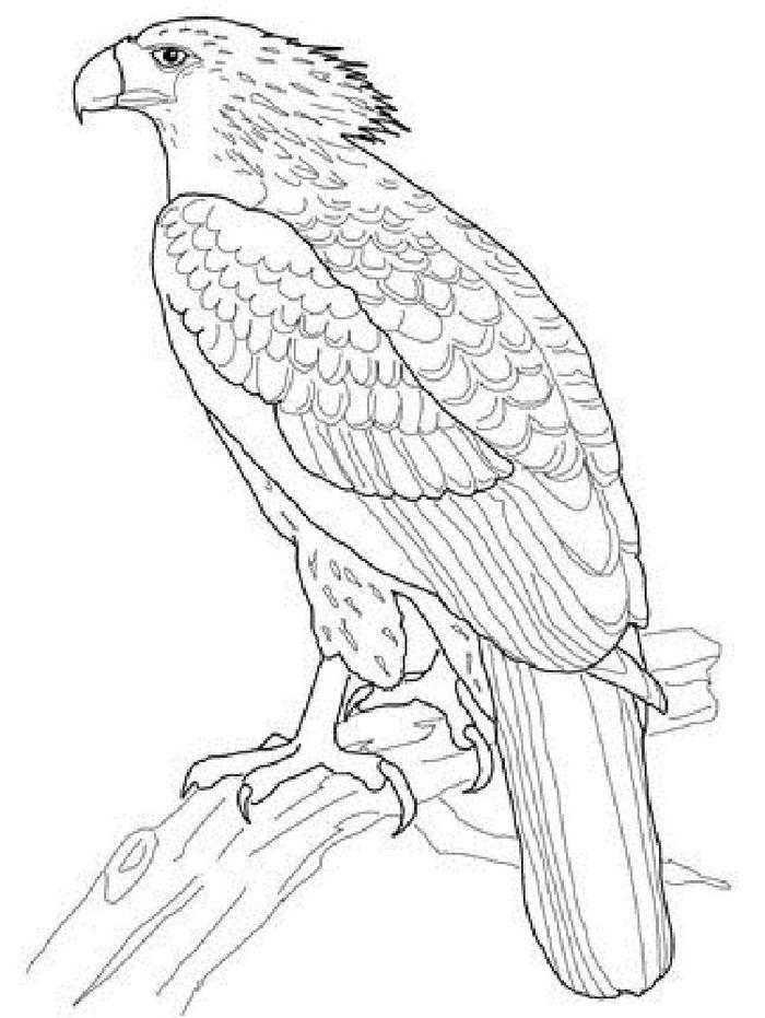 Philippine Eagles Coloring Pages