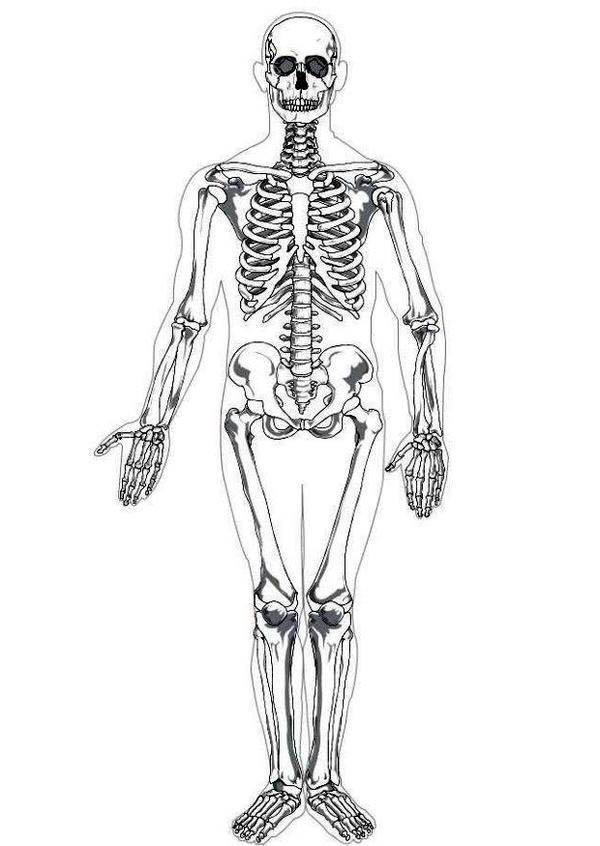 Photo Human Skeleton In Human Anatomy Coloring Pages
