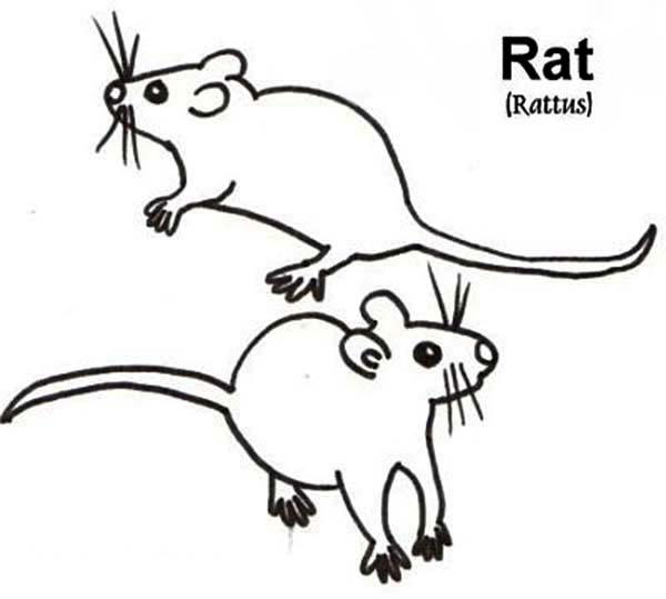 Picture Of Mouse And Rat Coloring Pages