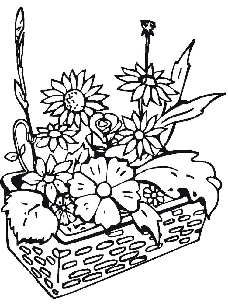 Plants And Flowers Coloring Pages Science