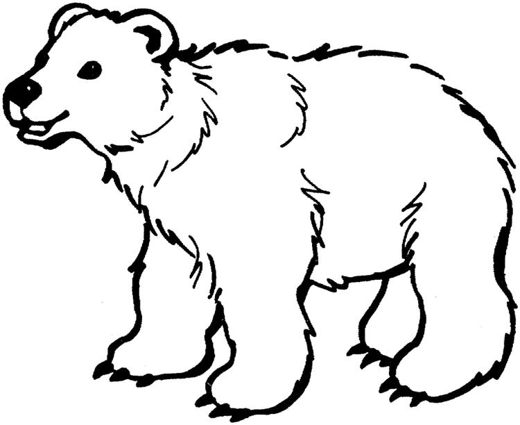 Polar Bear Color Pages To Print