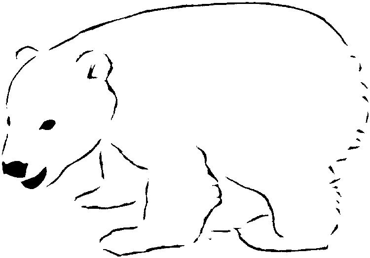 Polar Bear Coloring Pages Baby