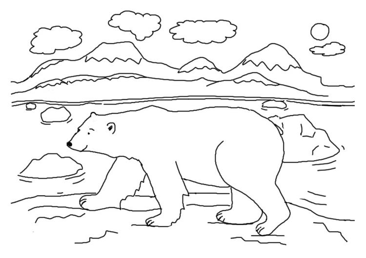 Polar Bear Coloring Pages North Pole