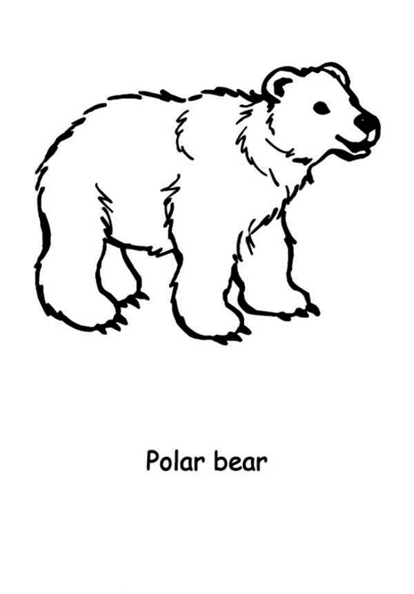Polar Bear Coloring Pages Printable For Kids