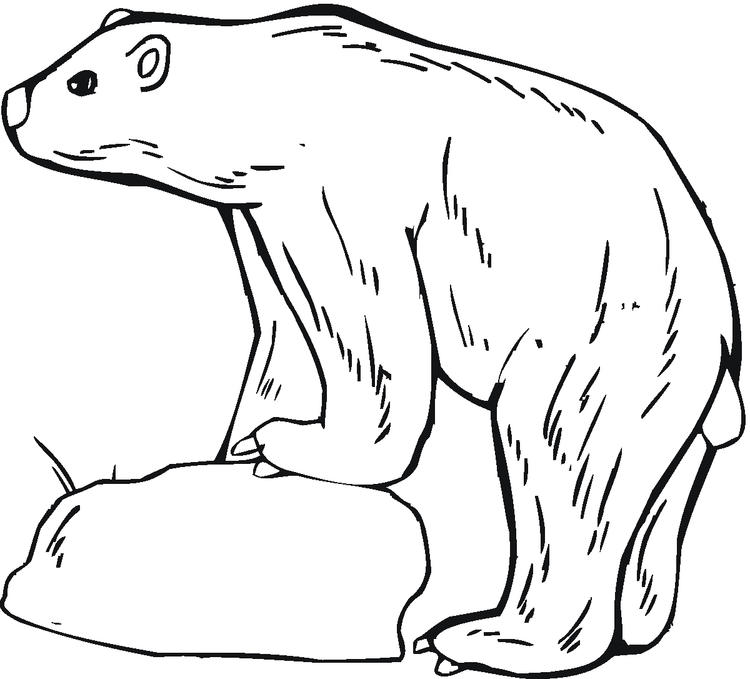 Polar Bear Coloring Pages Standing On Ice
