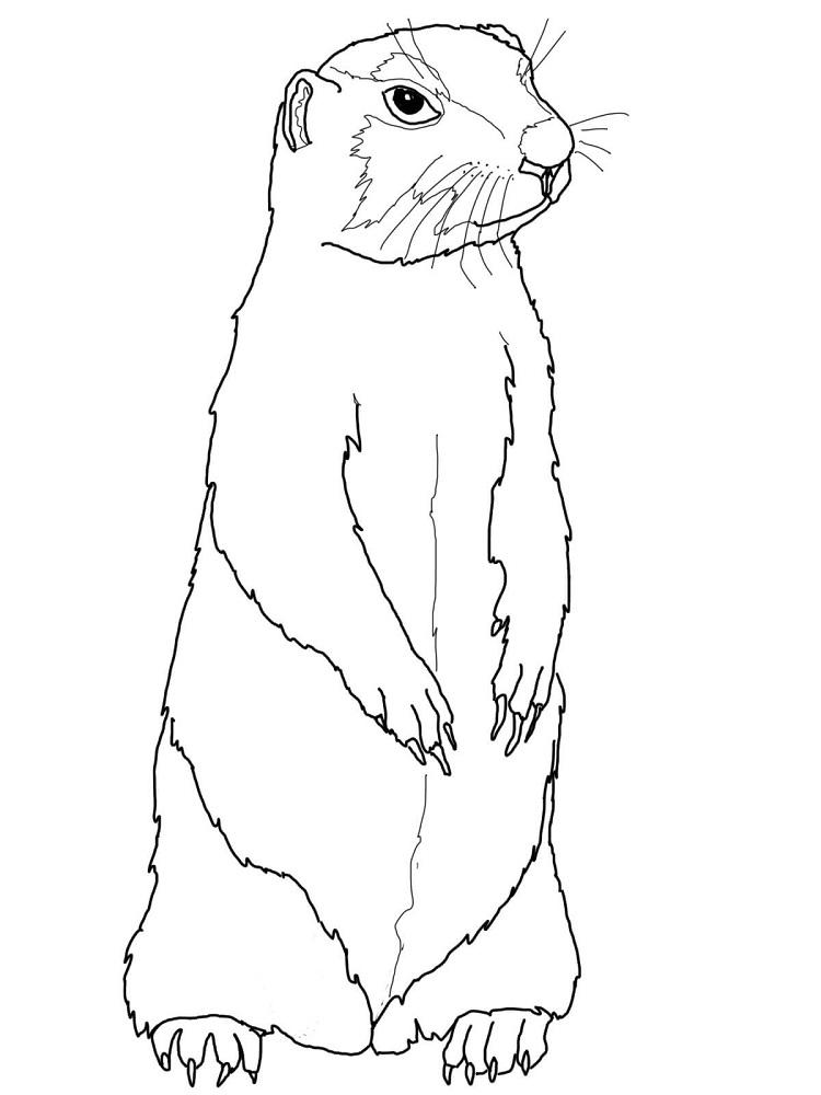 Prairie Dog Coloring Pages To Print