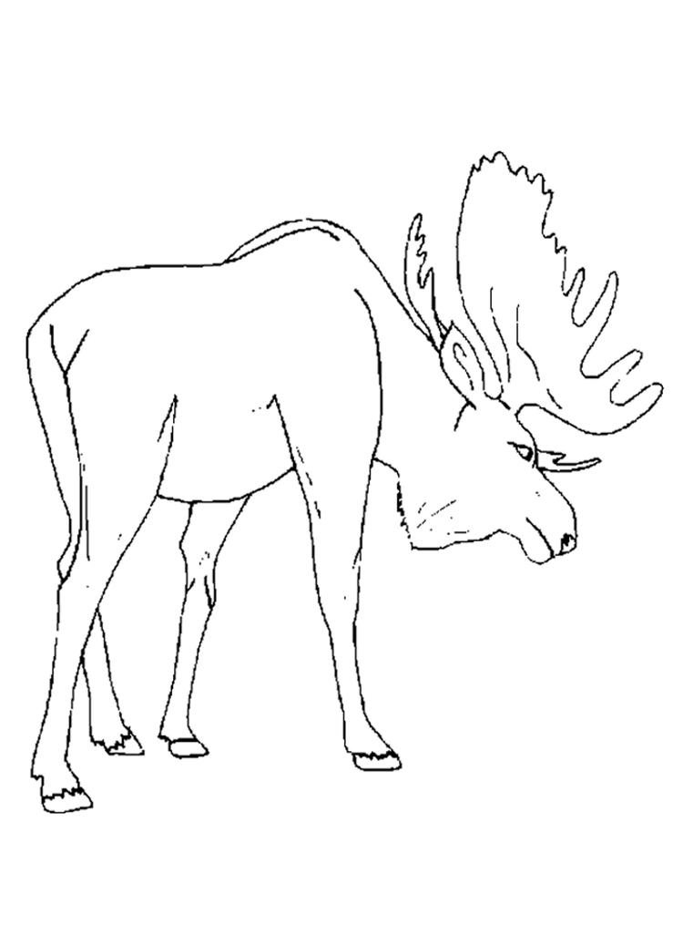 Preschool Moose Free Animal Coloring Pages