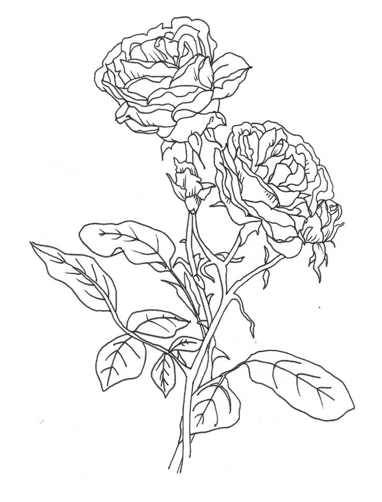 Pretty Coloring Pages Of Roses