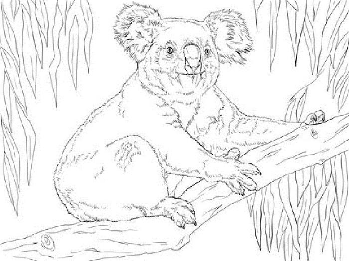 Priintable Koala Coloring Pages