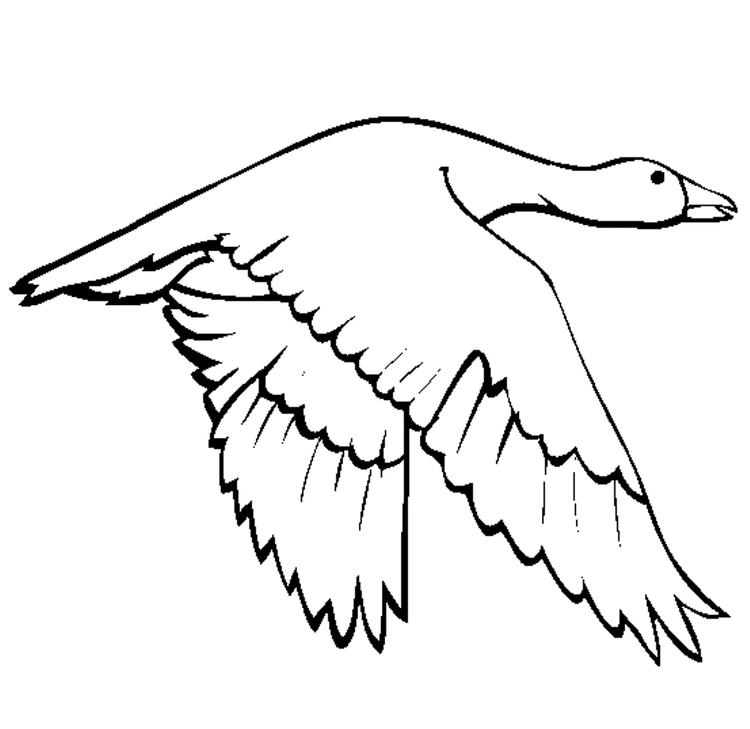 Printable Animal Coloring Pages Swan Goose