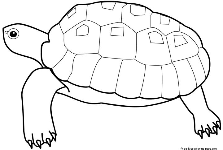 Printable Animal Sea Turtle Coloring Pages