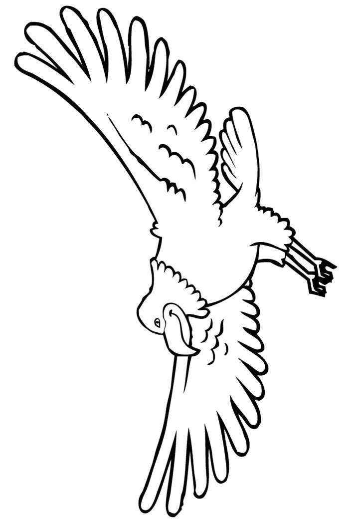 Printable Bald Eagle Coloring Pages For Kids Coloring Ideas