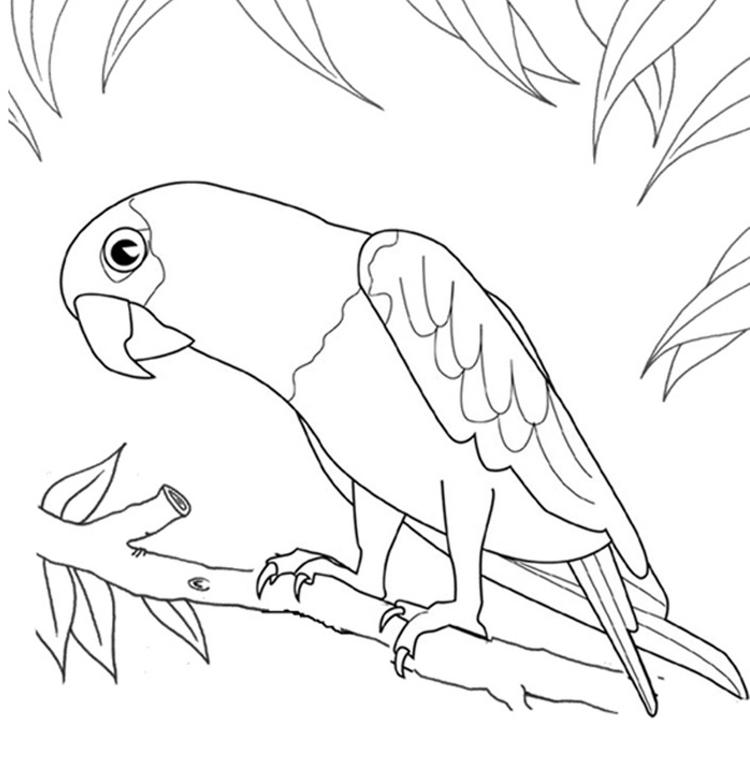 Printable Bird Coloring Page Parrot