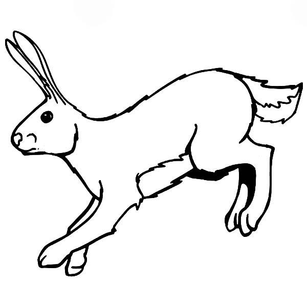Printable Bunny Coloring Pages For Kids