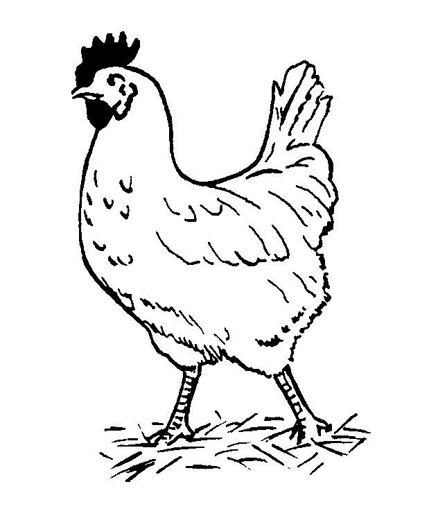 Printable Chicken Coloring Pages